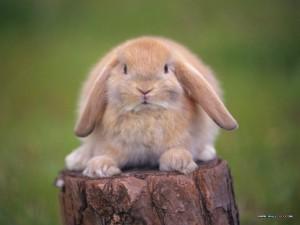 Как поймать кролика, интервью о поиске своего предназначения и смысла жизни