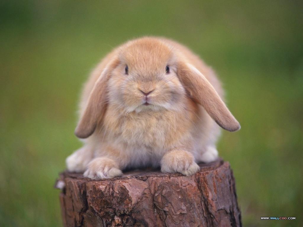 Как поймать кролика? (интервью)